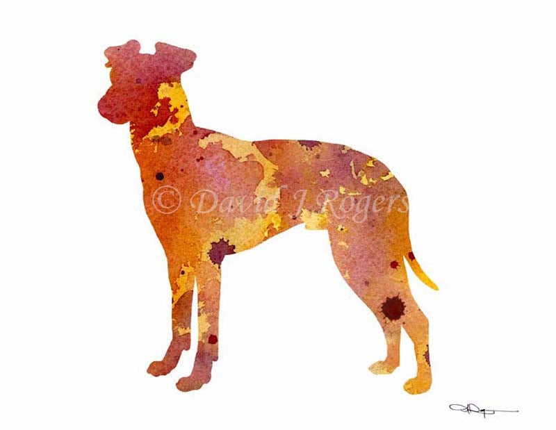 A Manchester Terrier 0 print based on a David J Rogers original watercolor