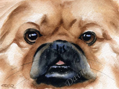 A Pekingese portrait print based on a David J Rogers original watercolor