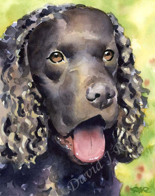 American Water Spaniel Dog Wall Art Print Poster Picture Painting