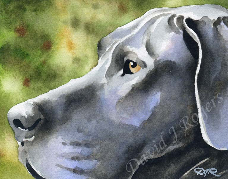 A Great Dane portrait print based on a David J Rogers original watercolor