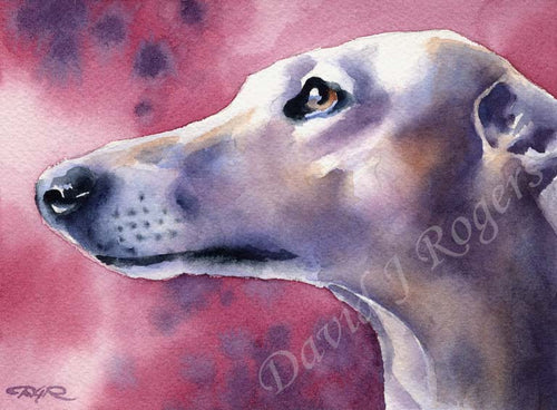 A Greyhound portrait print based on a David J Rogers original watercolor