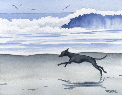 A Italian Greyhound beach print based on a David J Rogers original watercolor