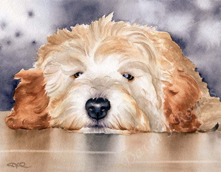 A Miniature Goldendoodle portrait print based on a David J Rogers original watercolor