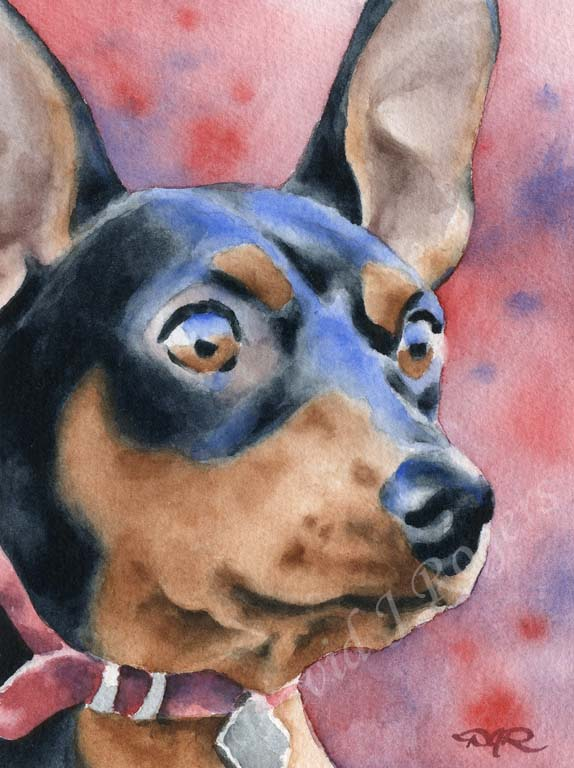 A Miniature Pincher portrait print based on a David J Rogers original watercolor
