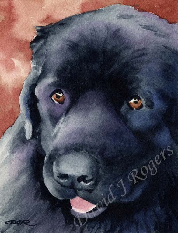 A Newfoundland portrait print based on a David J Rogers original watercolor
