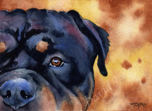 A Rottweiler portrait print based on a David J Rogers original watercolor
