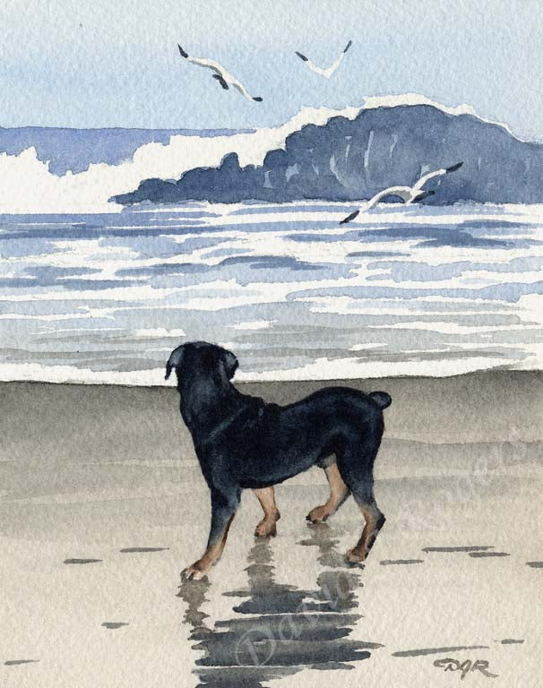 A Rottweiler beach print based on a David J Rogers original watercolor