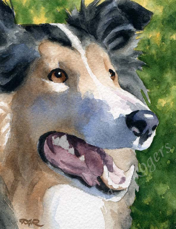 A Rough Collie portrait print based on a David J Rogers original watercolor