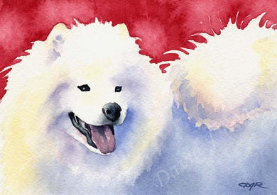A Samoyed portrait print based on a David J Rogers original watercolor