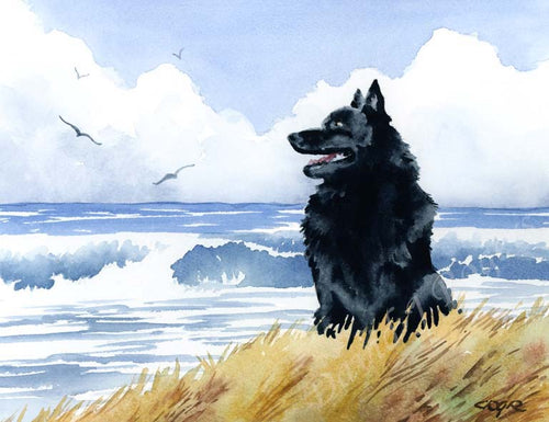 A Schipperke beach print based on a David J Rogers original watercolor