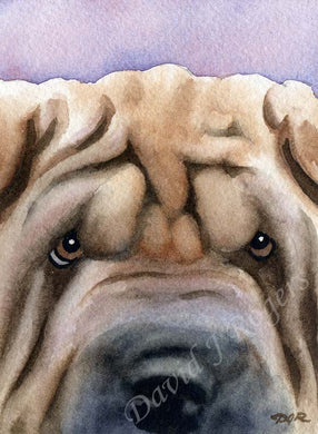 A Shar Pei portrait print based on a David J Rogers original watercolor