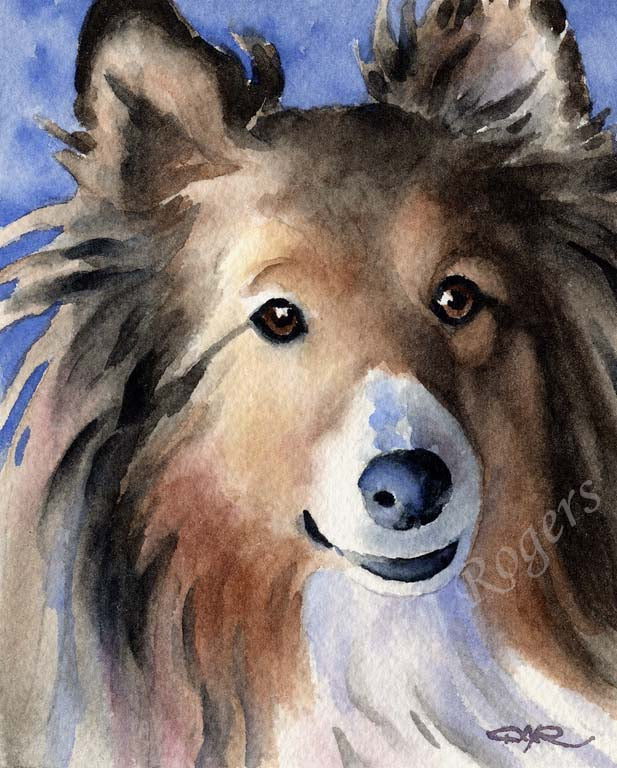 A Shetland Sheepdog portrait print based on a David J Rogers original watercolor