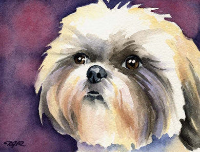 A Shih Tzu portrait print based on a David J Rogers original watercolor