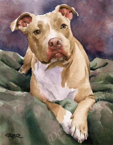 A Staffordshire Terrier portrait print based on a David J Rogers original watercolor
