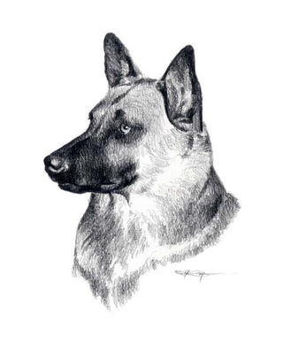 Belgian Malinois Dog Wall Art Print Poster Picture Painting Room Decor