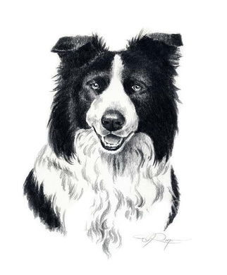 Border Collie Dog Wall Art Print Poster Picture Painting Room Decor