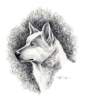 Load image into Gallery viewer, A Canaan Dog portrait print based on a David J Rogers original watercolor