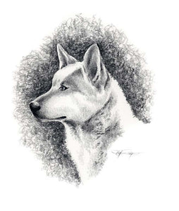 A Canaan Dog portrait print based on a David J Rogers original watercolor