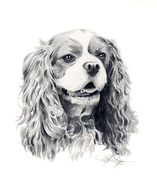 A Cavalier King Charles portrait print based on a David J Rogers original watercolor