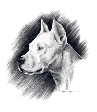 A Dogo Argentino portrait print based on a David J Rogers original watercolor
