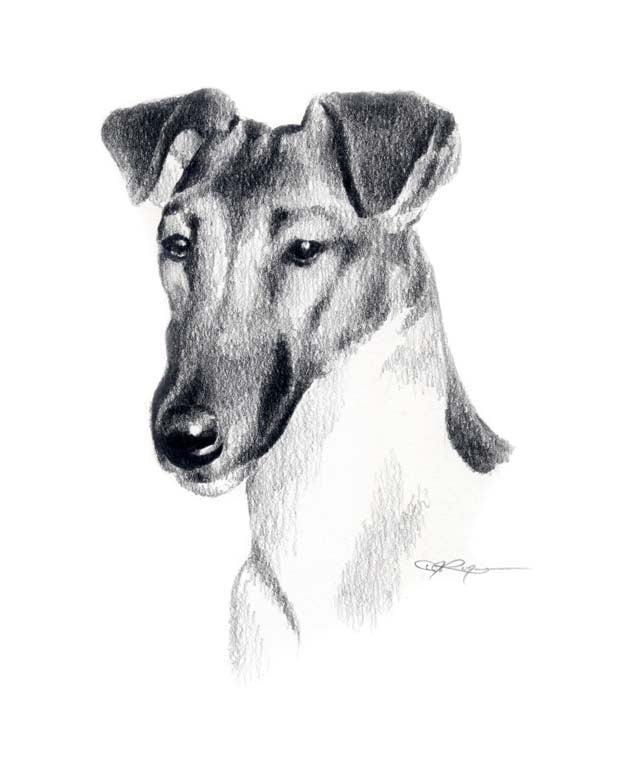 A Fox Terrier portrait print based on a David J Rogers original watercolor