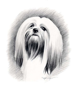 A Lhasa Apso portrait print based on a David J Rogers original watercolor