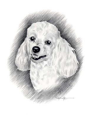 A Miniature Poodle portrait print based on a David J Rogers original watercolor