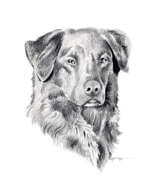 A Nova Scotia Duck Tolling Retriever 0 print based on a David J Rogers original watercolor