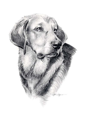 A Polish Hound portrait print based on a David J Rogers original watercolor