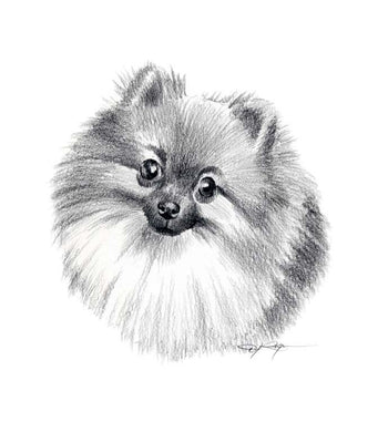 A Pomeranian portrait print based on a David J Rogers original watercolor
