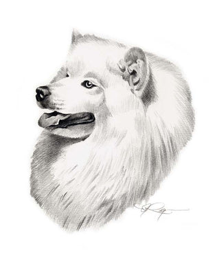 A Samoyed 0 print based on a David J Rogers original watercolor