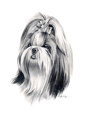 A Shih Tzu 0 print based on a David J Rogers original watercolor