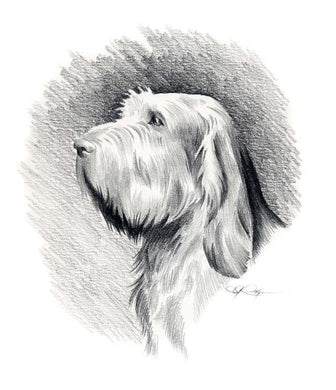 A Spinone Italiano 0 print based on a David J Rogers original watercolor