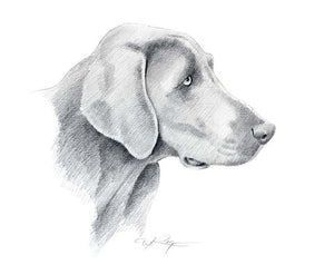 A Weimaraner 0 print based on a David J Rogers original watercolor