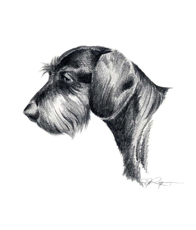 A Wire Haired Dachshund 0 print based on a David J Rogers original watercolor