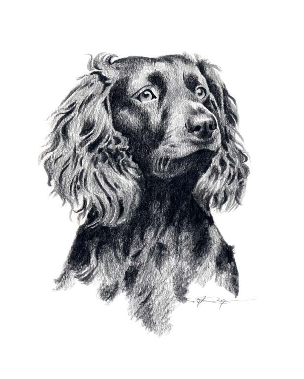 Boykin Spaniel Dog Wall Art Print Poster Picture Painting Room Decor Dog Prints Gallery