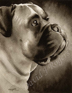 A Engilsh Mastiff portrait print based on a David J Rogers original watercolor