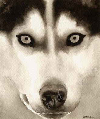 A Siberian Husky portrait print based on a David J Rogers original watercolor