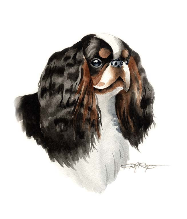 A English Toy Spaniel portrait print based on a David J Rogers original watercolor