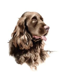 A Sussex Spaniel 0 print based on a David J Rogers original watercolor