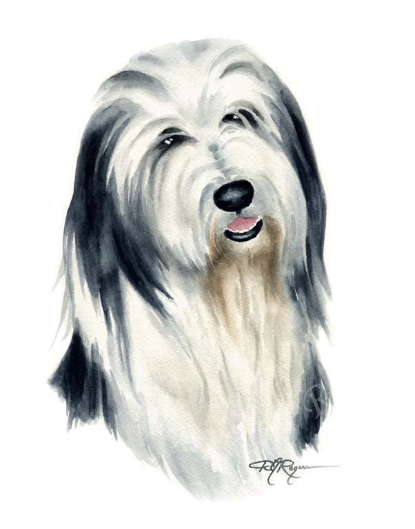 Bearded Collie Dog Wall Art Print Poster Picture Painting Room Decor