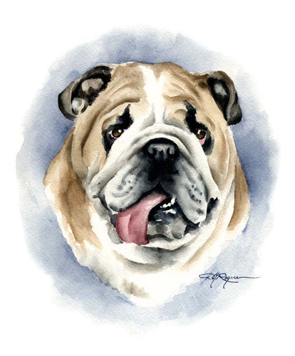 A Bulldog portrait print based on a David J Rogers original watercolor