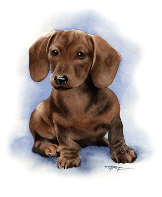 A Dachshund portrait print based on a David J Rogers original watercolor