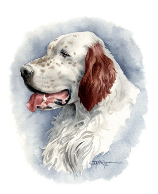 A English Setter portrait print based on a David J Rogers original watercolor