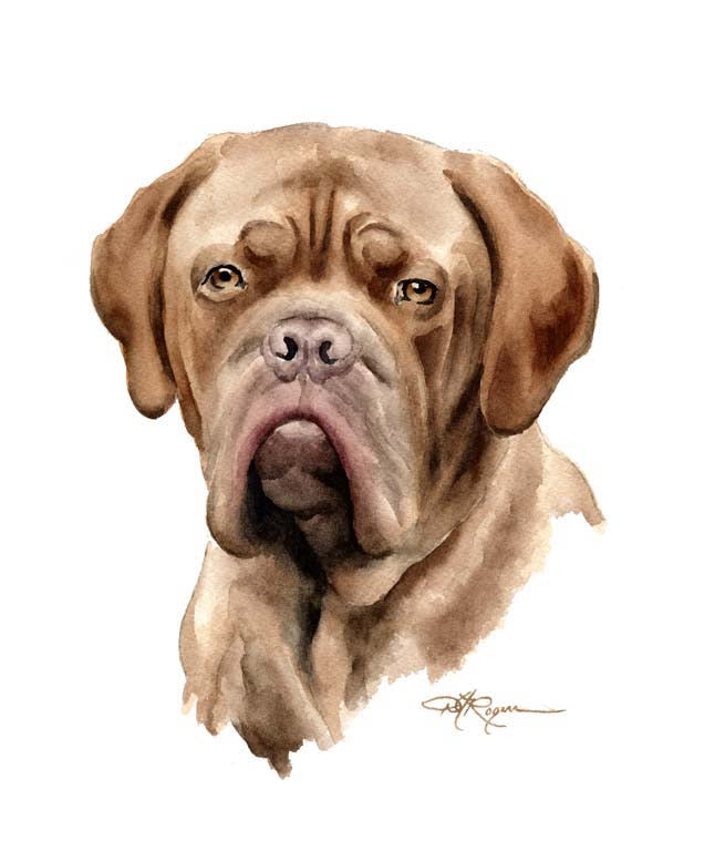 A French Mastiff portrait print based on a David J Rogers original watercolor