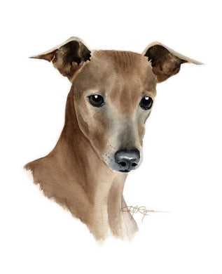 A Italian Greyhound portrait print based on a David J Rogers original watercolor
