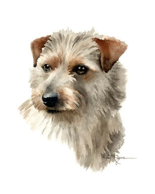 A Norfolk Terrier portrait print based on a David J Rogers original watercolor