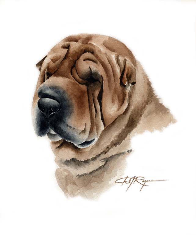 A Shar Pei 0 print based on a David J Rogers original watercolor
