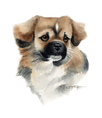 A Tibetan Spaniel 0 print based on a David J Rogers original watercolor