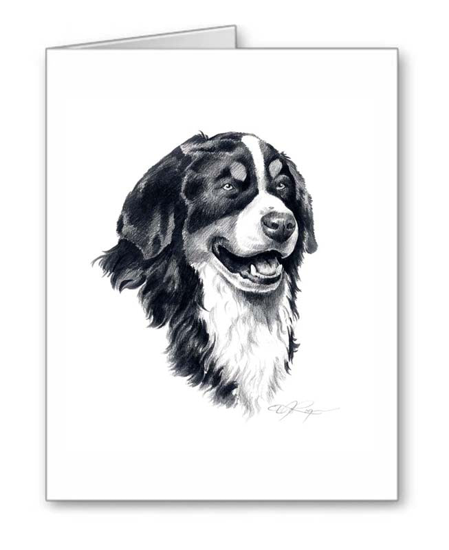 A Bernese Mountain Dog portrait print based on a David J Rogers original watercolor